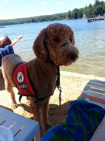 Labradoodle Provides Service and Support